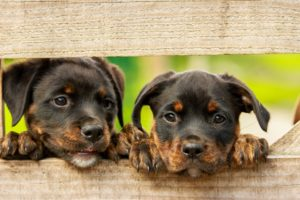 Hundesprüche - Zwei süße Hunde