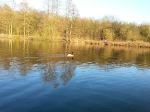 Sprüche für die Seele - Enten auf einem See