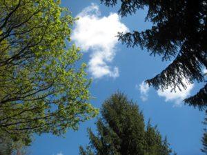 Sprüche für die Seele - Bäume mit blauem Himmel
