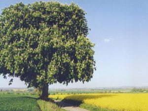 Traurige Sprüche - Baum auf einem Feld