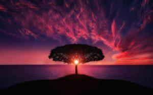 Schöne Sprüche, die zum Nachdennken anregen - Baum im Sonnenuntergang