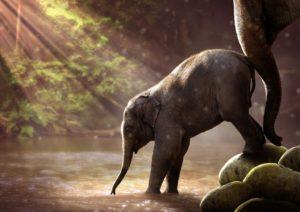 Sprüche, die Mut machen und Kraft geben - Elefant im Wasser