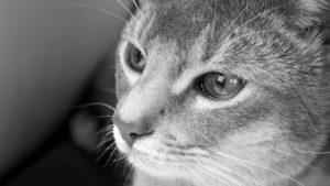 Tiefgründige Sprüche - Katze